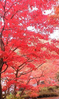 紅葉狩り☆